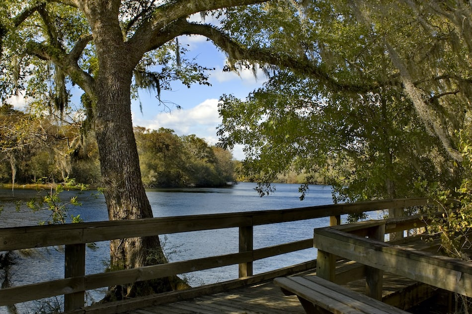 picture of The peaceful boardwalk on the Suwannee River