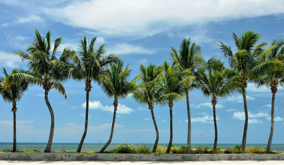 picture of sunny florida sky and palm trees