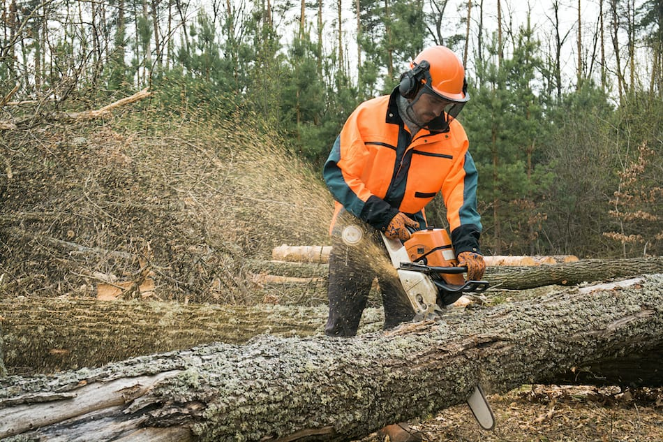 picture of Forestry worker with chainsaw is sawing a log.