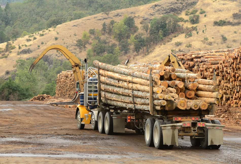 Operations in the log yard at a conifer log mill