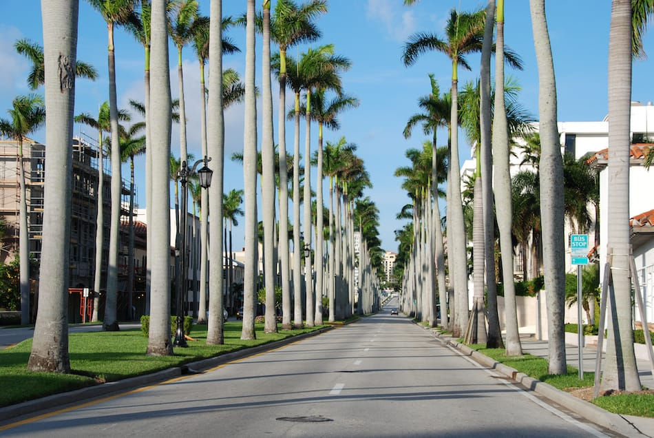 Trees in a famous street of West Palm Beach
